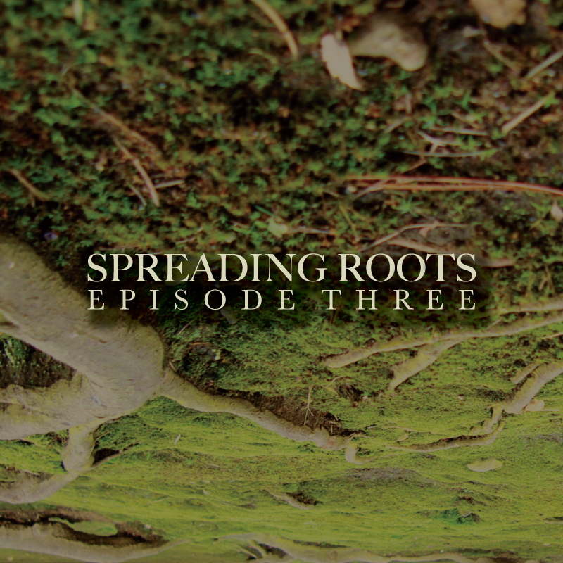 SPREADING_ROOTS_3_COVER