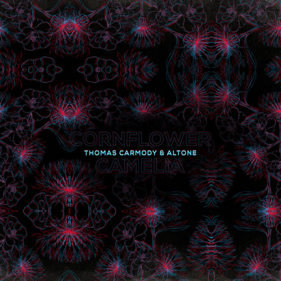 Cornflower and Camelia, by Thomas Carmody & Altone